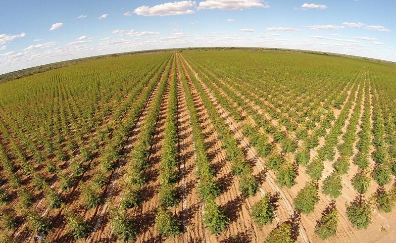 desert tree farming egypt