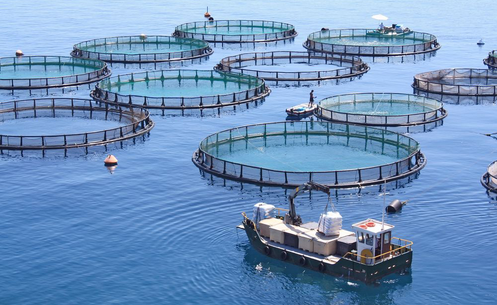 Fish Farming Middle East