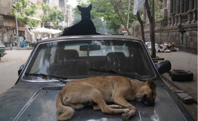 dogs car