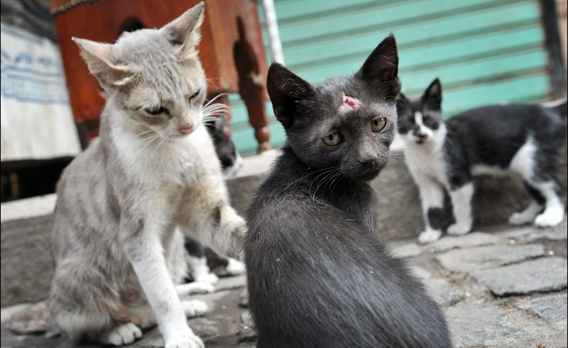 Exporting strays in Egypt