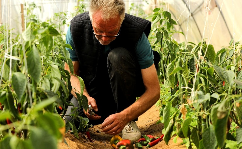 Habiba Organic Farm, Nuweiba