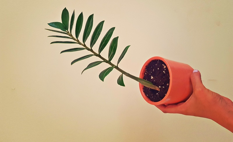 PlantCult