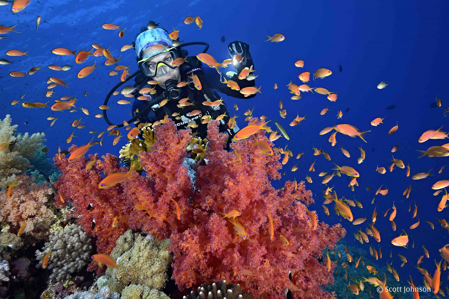 Egypt to Adopt 'Green Fins' International Environmental Standards for Preservation of Coral Reefs