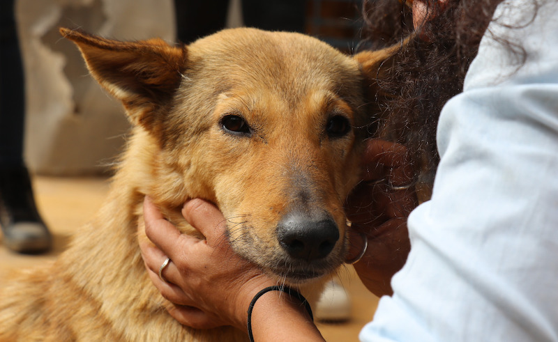 Dogs make up a huge portion of Egypt's stray animals.