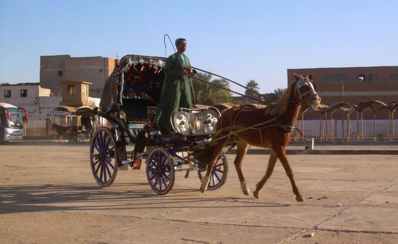 hantour egypt