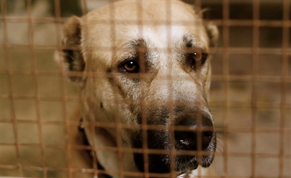 Is it the Right Time for a Conversation About Animal Welfare in Egypt?