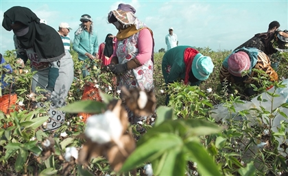 Egypt's Cotton Exports Have Gone Up Since 2017