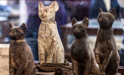 Rare Lion Mummies and Giant Stone Scarab Uncovered Near Saqqara