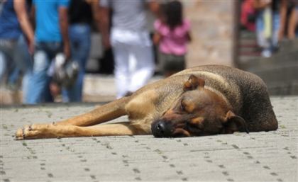 Pet Marketplace App 'Pawsket' Are Raising Awareness for Animal Rescue in Egypt