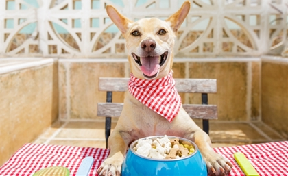 The Fresh Pack is the Local Vet-Based Service Providing Personalized Healthy Meals for Your Dogs