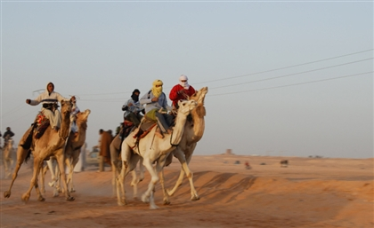 Matrouh is Holding Its First Camel Racing Festival
