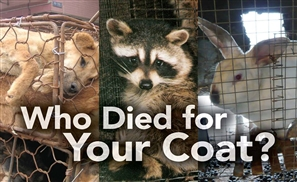 Facebook Community Rallies to Say No to Fur