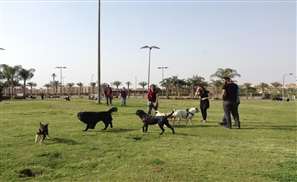 9 Places You Didn't Know You Could Take Your Dog in Cairo