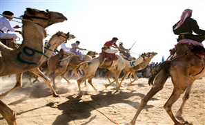 Camel Races Take Over Luxor