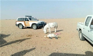Donkey Avoids Rape, Kills Attacker