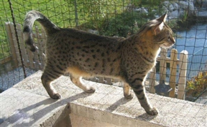 Gezira Faces Legal Challenge Over Cat Murders