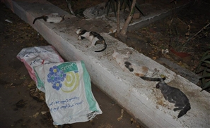 Gezira Club Thug Nabbed With Bag of Dead Cats