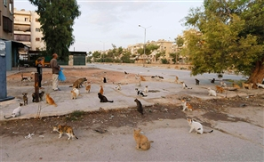 Saving Syria's Abandoned Pets