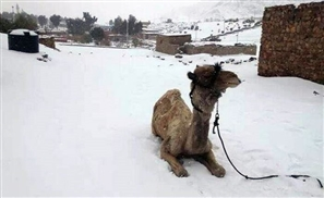 Egypt's Meteorological Head Expects More Snow this Winter
