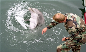 Israeli Dolphin Spy Caught by Hamas