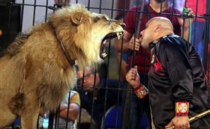 Graphic Video: Lion Attacks and Kills Trainer in Alexandria