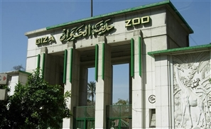5 Falcons Stolen from the Giza Zoo