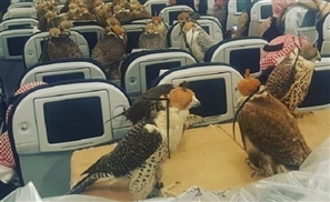 Saudi Prince Takes His 80 Falcons Aboard A Qatar Airways Flight