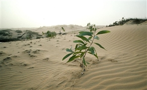 Egyptians Ingeniously Create Biofuel Using Sewage Water and Desert Trees