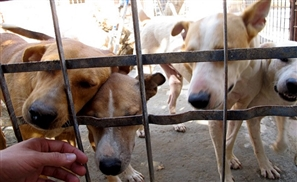 Cairo Animal Shelter ESMA May Shut Down Due to Lack of Funds