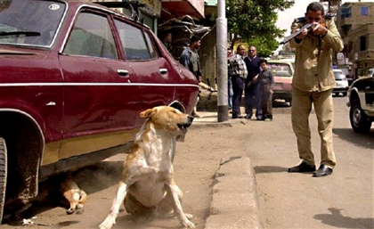 Egyptian Veterinary Official Calls on Authorities to Shoot Stray Dogs