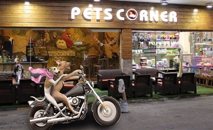 Egypt's First Dog-Friendly Cafe Opens in Alexandria