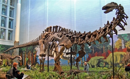 The Mansourasaurus: Massive Dinosaur Remains Discovered In Egypt