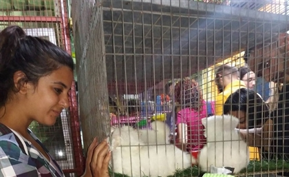 Pet Shop Raid: How a Group of Cairenes are Forcing an End to Animal Abuse at Pet Shops