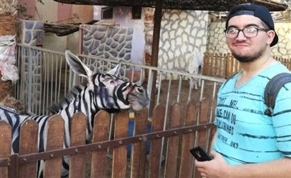 Egyptian Park Paints Donkeys to Look Like Zebras