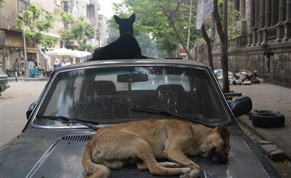 Egypt's Parliament Requests Briefing on Stray Dogs' Situation From Prime Minister
