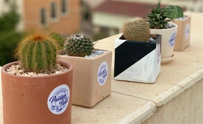 The Egyptian Plant Specialist Keeping the Memory of its Late Founder Alive One Cactus at a Time
