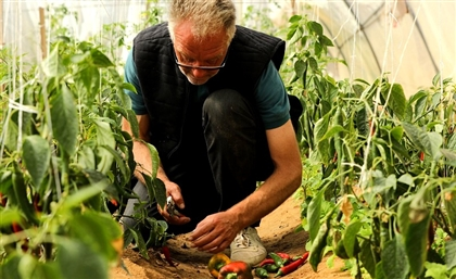 This Organic Farm and Eco-Lodge In Nuweiba is Leading the Way in Egyptian Agro-Tourism