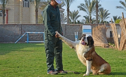 5 Expert Dog Trainers in Cairo
