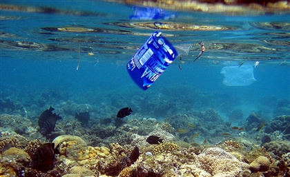 Dahab Launches Campaign to Become Plastic-Free Town