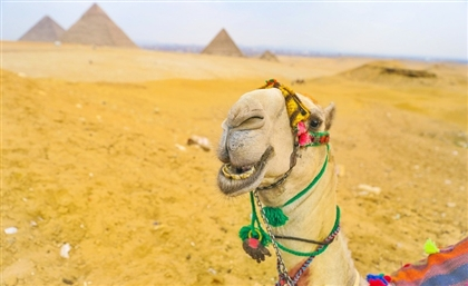 American Tourist Arrested For Attempting to Take 'Nude Selfie' at Pyramids of Giza