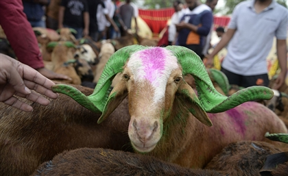 Cairo Governorate to Impose EGP 5000 Fine For Animal-Slaughter in Streets This Eid