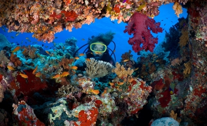 Egyptian Ministry of Tourism Halts Diving and Water Sport Licenses