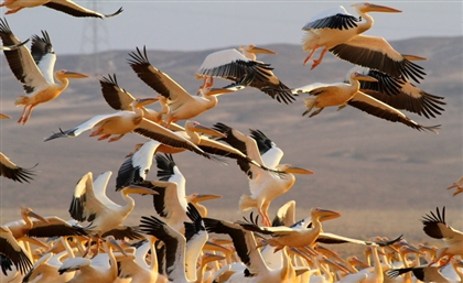 Different Species of Birds Rest on Red Sea Beaches Due to Lack of Human Disturbance