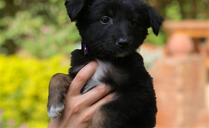Help a Puppy Find Its Forever Home with Street Paws Egypt