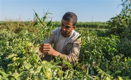 Egyptian Food security Project Named Among Top 5 at WSIS Competition