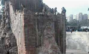 Attackers Beat Up Monkeys in Alexandria Zoo