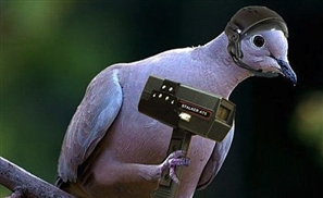 Bird. James Bird.