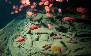 Classic Cars Found in WWII Red Sea Shipwreck