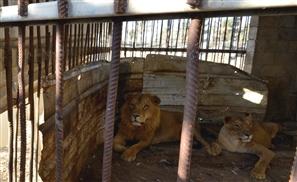 Rescue Mission to Gaza Zoo