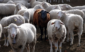 Government Puts In Place Measures To Curb Slaughtering on Streets This Eid